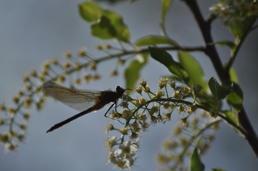 return of the dragonflies