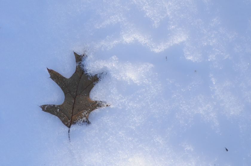 winter's leaf