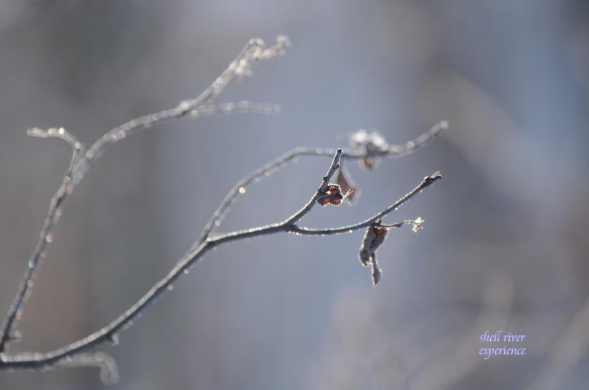 branch still life